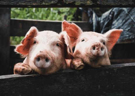 carne-de-cerdo-blanco